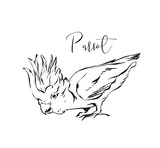 Hand drawn vector abstract artistic ink textured graphic sketch drawing illustration of tropical exotic parrot isolated on white background - 203511956