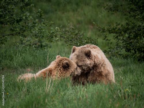 Fotobehang Lion Woodstokkz