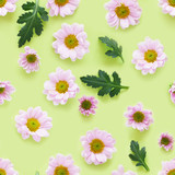 Seamless pattern from plants, pink chrysanthemum flowers on green background, flat lay, top view. - 203546914
