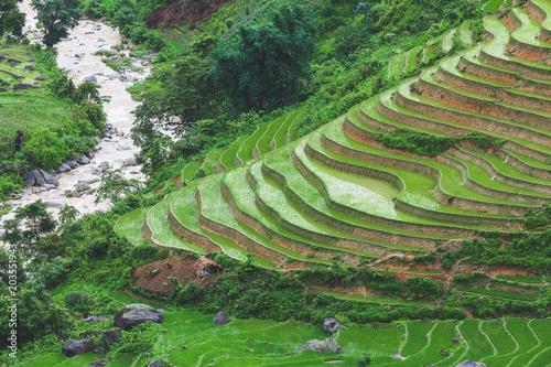 Plexiglas Rijstvelden Terraced rice field