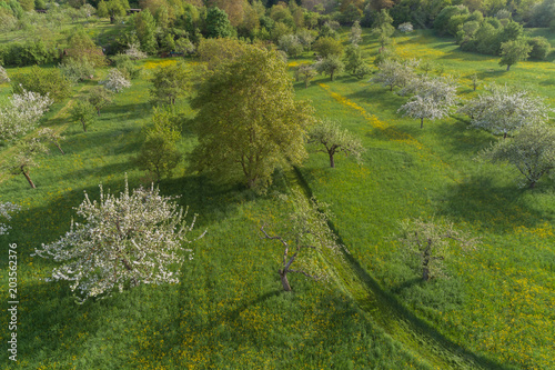 Fotobehang Groene Luftaufnahme blühende Streuobstwiesen im Frühling