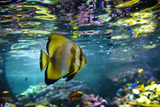 Aquarium tropical fish and coral reef - 203592536