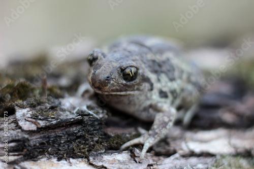 Plexiglas Kikker toad is heated in the spring sun