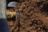 Motor cultivator on soil. - 203647366
