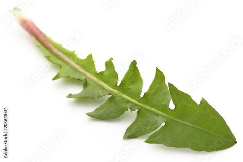 Medicinal dandelion leaf - 203649514