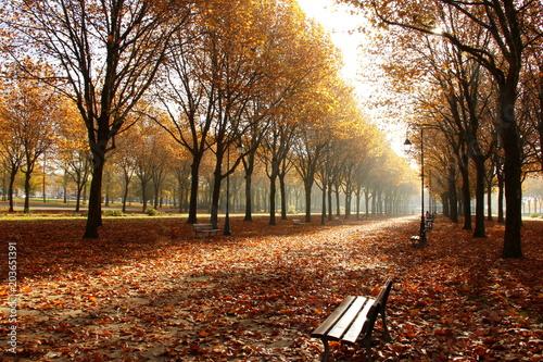 Fotobehang Bruin Les feuilles d'automne emportées par le vent