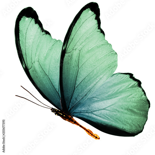 beautiful wings of a blue butterfly isolated on a white background - 203677393