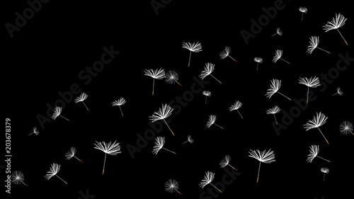 latajacy-dandelion-na-czarnym-tle