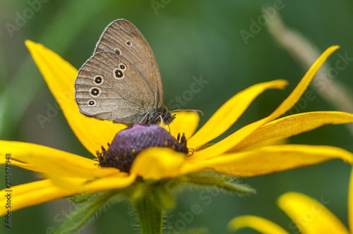 Plexiglas Vlinder Butterfly sitting on a flower, closeup