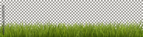 Isolated Green Grass - 203687714