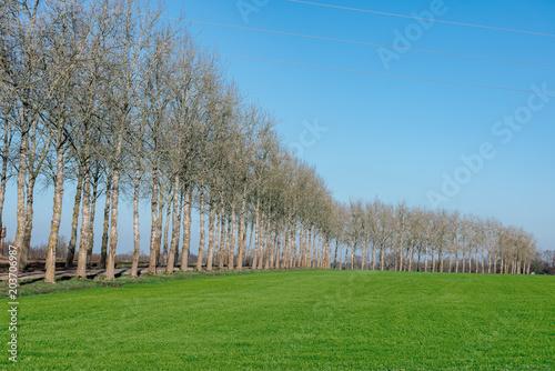 Plexiglas Blauw beautiful green meadow in heavy mist