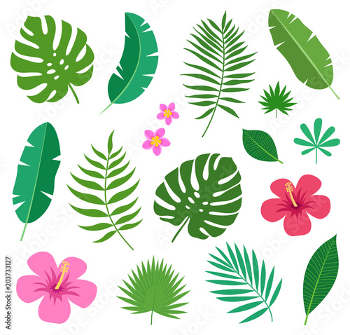 Fototapeta Set of tropical exotic plants leaves and flowers of plumeria and hibiscus isolated on white background. Vector illustration