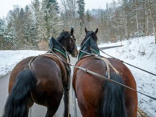 Horse-drawn carriage going to Neuschwanstein Castle