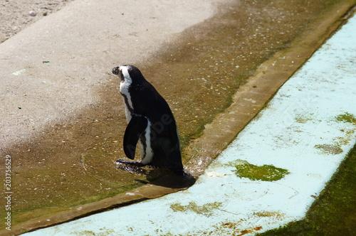 Plexiglas Pinguin Pinguin im Zoo