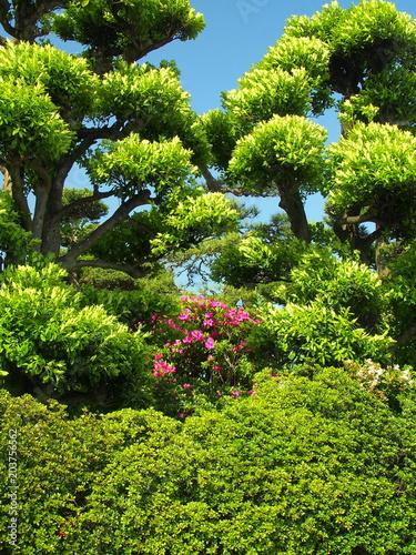 ツツジと植木風景