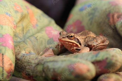 Plexiglas Kikker frog in hand