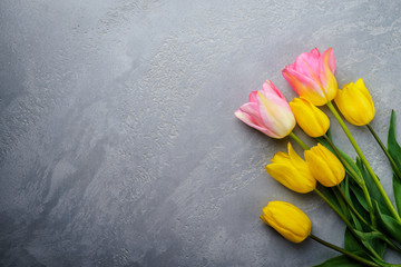 Fresh pink and yellow tulips on grey background. Spring floral  background