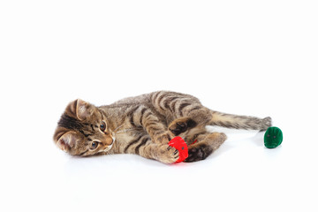 Cute kitten is played with a red and green toy mouse on a white background