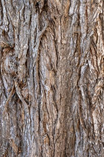 Oberfläche einer rissigen Borke eines alten Baumes - 203805546