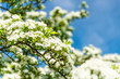 Frühlingsblüte in Deutschland