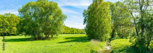 Waldlichtung in Deutschland - Panorama- Frühjahr - 203811715