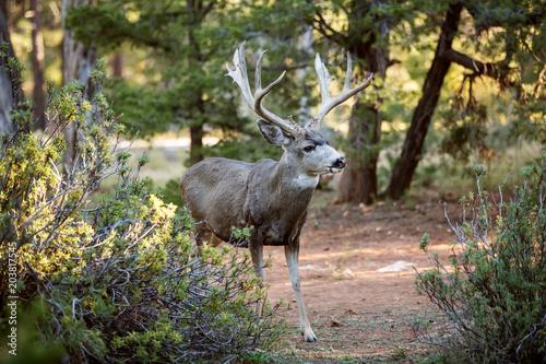 Fotobehang Hert Deer in Yosemite national park