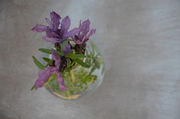 Lavendel in Glasvase- Hintergrund
