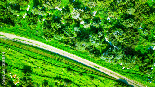 Fotobehang Groene Aerial view of a green landscape in sunny day. Nature background.