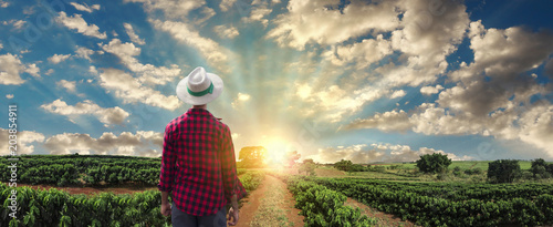 Farmer or working with hat on coffee field at sunset field - 203854911