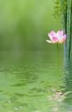 composition aquatique zen, lotus et bambous .