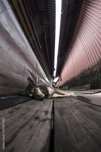 Pies leniwi się na chodnik między drewnianych domów na palach w Malezji Penang klanu pomostów