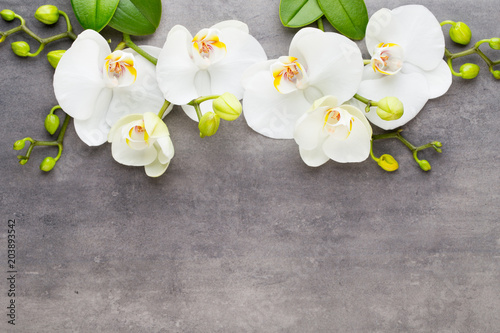 Beauty orchid on a gray background. Spa scene. - 203893542