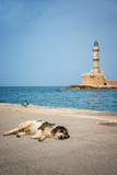 Dog asleep in the sun in the harbor of Chania, the lighthouse in the background, Crete, Greece - 203898773