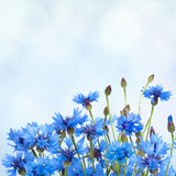 Rustic Border of Blue Cornflower for Greeting card