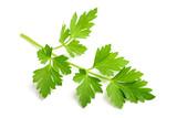 Fresh parsley sprig - 203919127
