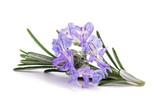 Rosemary sprig in flowers - 203920561