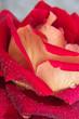 Water drops on rose petal.