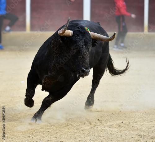 mata magnetyczna spanish bull