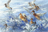 a flock of ducks in the sea splatter watercolor background