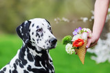 woman holds an ice cone with flowers to a dog