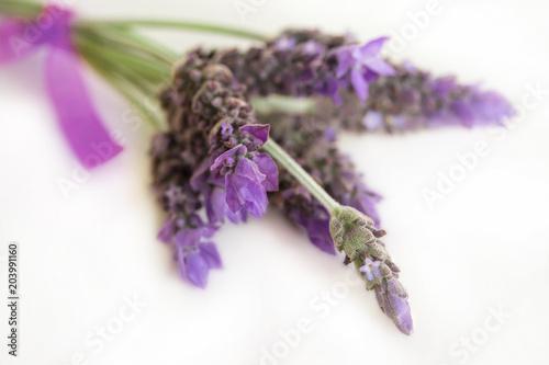 Aluminium Lavendel Lavender flowers
