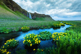 Sunrise on Seljalandfoss waterfall on Seljalandsa river, Iceland, Europe. Yellow flowers around a blue stream