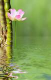 décor zen aquatique, bambous et lotus rose