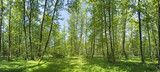 Sunny morning in the summer forest