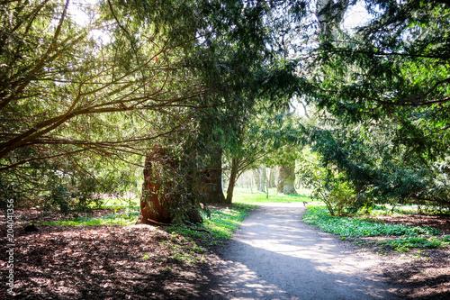 Żwir droga przez tunelu robić drzewa w pogodnym zieleń parku.