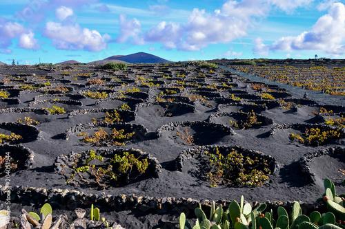 Fotobehang Wijngaard Landscape in Tropical Volcanic Canary Islands Spain