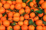 Citrus fruit background. Fresh Tangerines (mandarines, clementines, citrus oranges)  with green leaves. Wallpaper, poster.