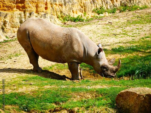 Fotobehang Neushoorn Rhinocéros