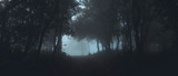 Fog in the forest morning Pine trees  - 204071309
