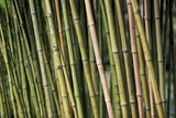 Engravings on the bamboos